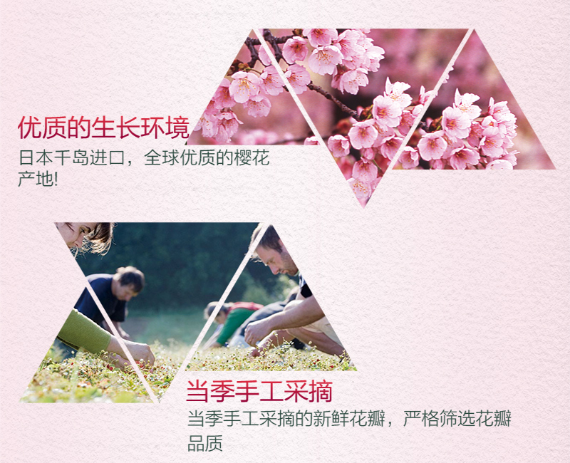 樱花花瓣水(手机端)_07.jpg
